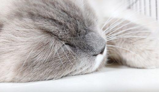 「猫は冬に太るのか?」について