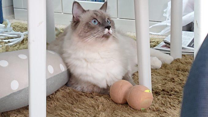 散らかった部屋で寛ぐ猫