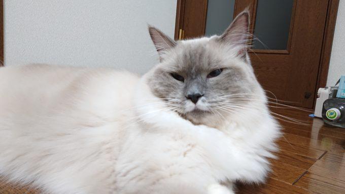 猫の嫉妬の眼差し