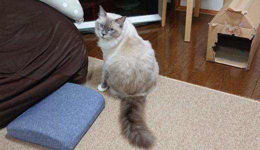 「猫は散らかった部屋が好き!」について
