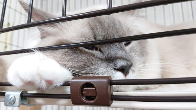 つまらなさそうな猫