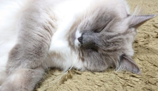 【疲れないの?】謎の寝方をする猫について