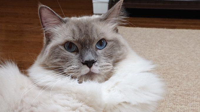 驚いた様子の猫。耳が立っている様子。