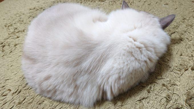 身体を真ん丸にして眠る猫