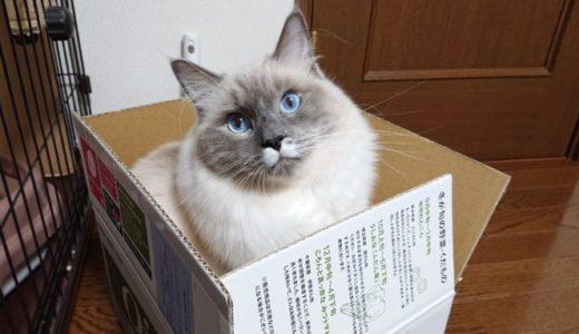 猫にクリスマスプレゼントをあげるかどうか問題について