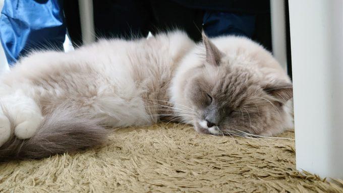 椅子の下で眠る猫。安眠中。