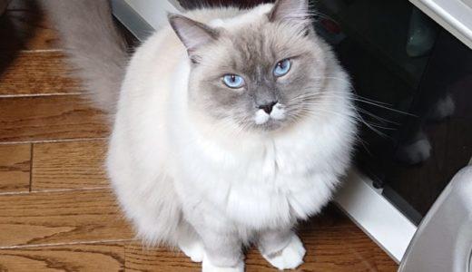 猫との遊びについて ブログ内記事まとめ