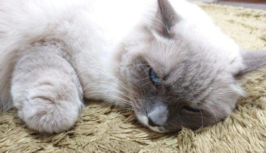 赤ちゃんとの生活が与えた猫の変化 その2 ~猫は嫉妬を覚えた~