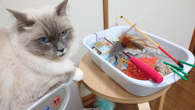 猫用おもちゃとプリューシュ