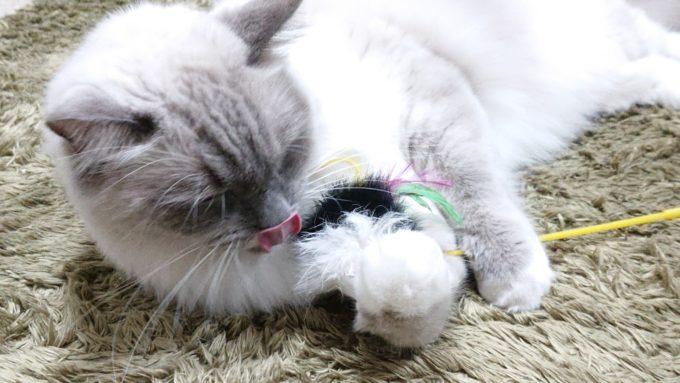 ネズミのついた猫じゃらし
