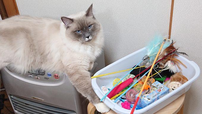プリューシュとおもちゃ箱。おもちゃ箱には猫じゃらしなどが入っている。