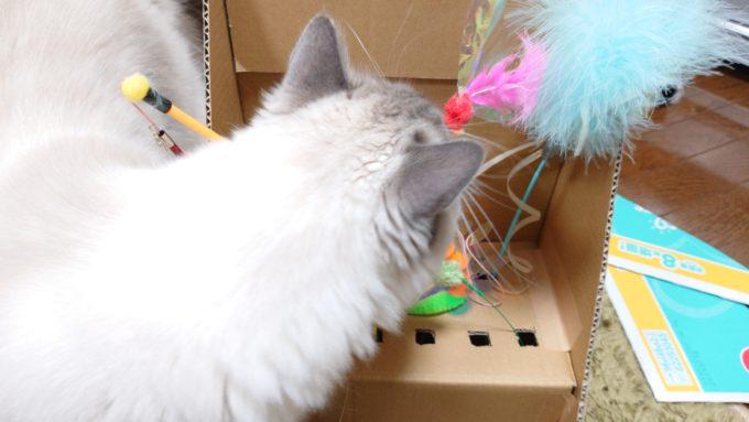 収納ボックスを見に来た猫。飼い主の邪魔になっている。