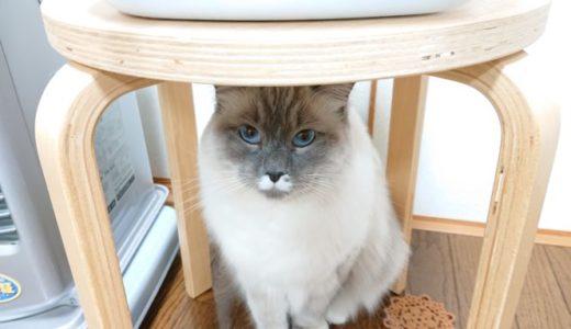 【誤飲誤食・ケガなど】猫用おもちゃによる事故とは?