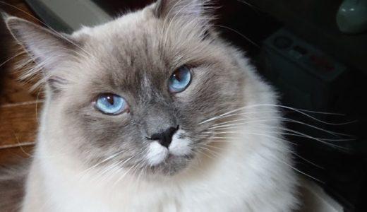 【自作で解決】猫じゃらしの収納ボックスを段ボールで作ろう!