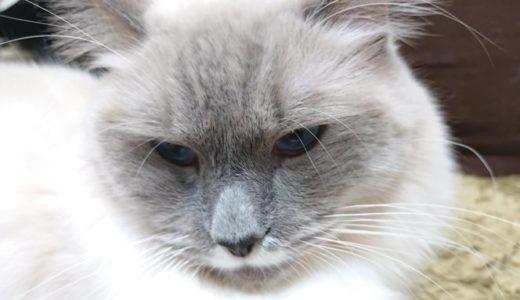 猫のしつけについて ブログ内記事まとめ