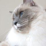 猫飼いがSNSを活用すると得られるメリットについて