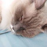 【悪夢】無断で猫を3匹連れ帰って来られた話