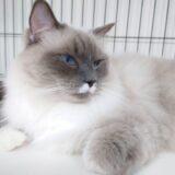 猫用食器の洗い方について